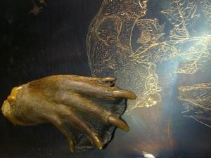 Beaver Hand/Grant Museum